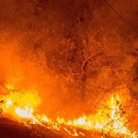CA tree fire